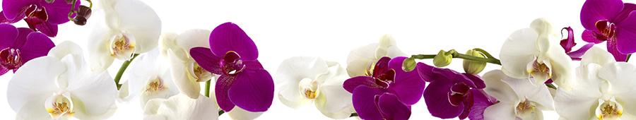 Скинали - Белые и фиолетовые орхидеи