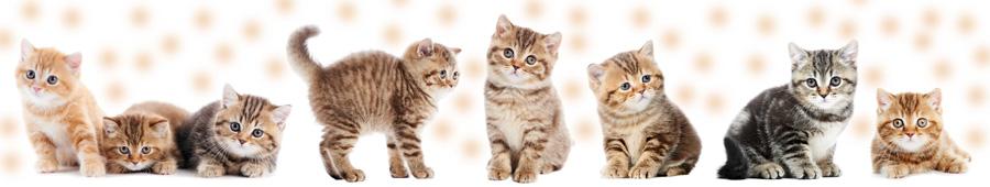 Скинали - Маленькие котята
