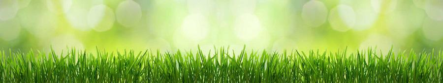 Скинали - Трава на зеленом фоне
