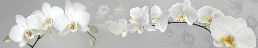 Скинали - Белые орхидеи на серебряном фоне