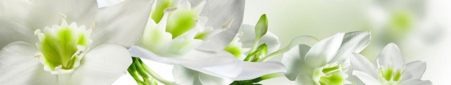 Скинали - Орхидея белая