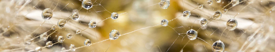 Скинали - Капли воды на семенах одуванчика