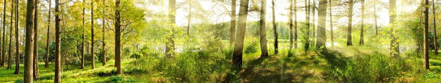 Скинали - Лес на берегу озера в лучах солнца
