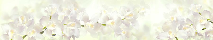 Скинали - Нежная белая орхидея