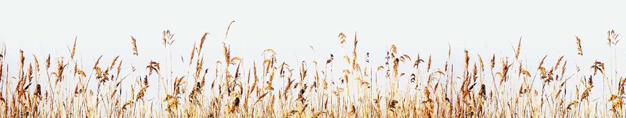 Скинали - Трава у берега