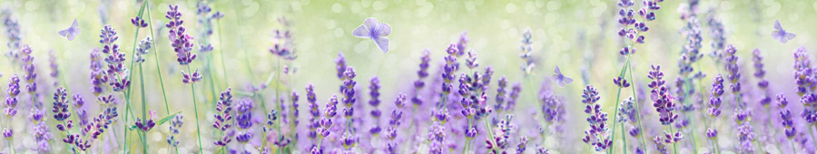 Скинали - Нежный лавандовый фон с порхающими бабочками