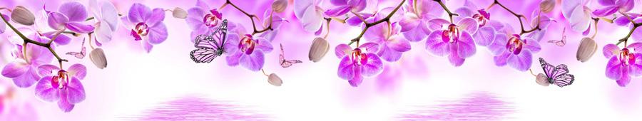 Скинали - Пурпурные орхидеи и бабочки на белом фоне