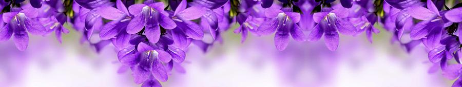 Скинали - Фиолетовые колокольчики