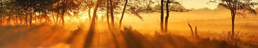 Скинали - Солнечное утро в поле