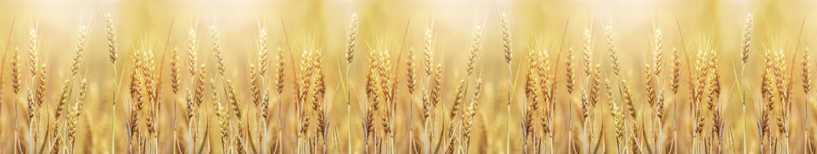 Скинали - Золотистая пшеница