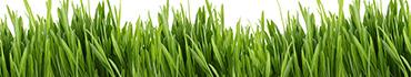 Скинали - Зеленая трава