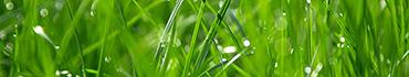 Скинали - Трава в лучах солнца