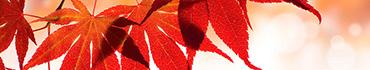 Скинали - Красные осенние листочки