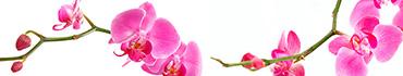 Скинали - Веточка розовой орхидеи на белом фоне