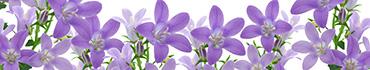 Скинали - Сиреневые полевые цветы