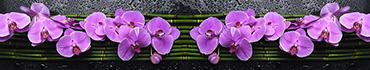 Скинали - Фиолетовые орхидеи