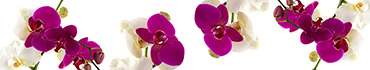 Скинали - Орхидеи белые и фиолетовые