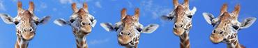 Скинали - Милые жирафы