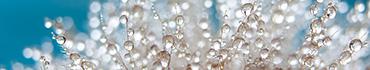 Скинали - Капли росы на растении крупным планом