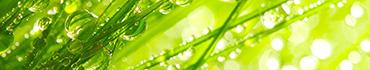 Скинали - По утрам на травы выпадают росы