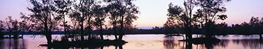 Скинали - Болотная местность