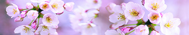 Скинали - Яблоневые цветы на нежно-фиолетовом поле
