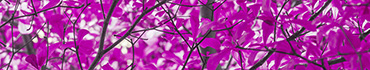 Скинали - Крона дерева в сиреневом цвете