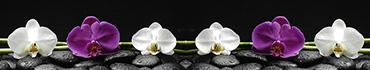Скинали - Белые и фиолетовые орхидеи на черных камнях