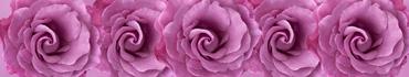 Скинали - Сиреневые розы