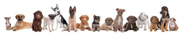 Скинали - Все виды собак