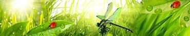 Скинали - Зелень с росой, божьи коровки  и стрекоза