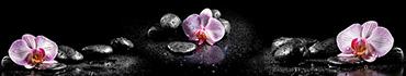 Скинали - Три орхидеи на черных камнях