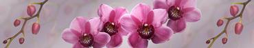 Скинали - Композиция из розовых орхидей с веточками