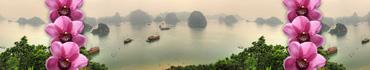 Скинали - Орхидеи на фоне панорамы залива во Вьетнаме