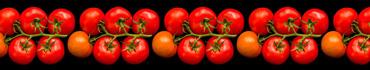 Скинали - Ветка томатов на черном фоне