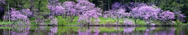 Скинали - Цветение деревьев у берега озера Мармо в Иллинойсе