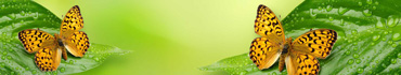 Скинали - Бабочка на листике с каплями воды