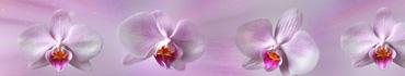 Скинали - Орхидеи на фоне розовых оттенков