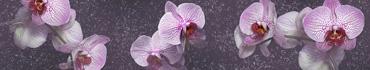 Скинали - Пятнистая орхидея
