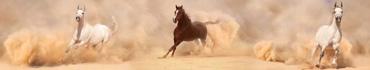 Скинали - Арабские лошади