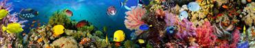 Скинали - Кораллы и рыбки