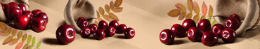 Скинали - Урожай яблок на теплом коричневом фоне