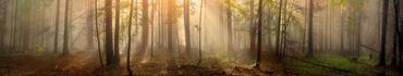 Скинали - Нежные лучи солнца туманным утром, Карпаты
