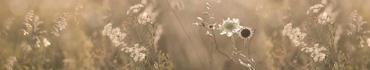 Скинали - Цветы и травы - поле в утренние часы