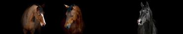 Скинали - Портреты чистокровных лошадей на черном фоне