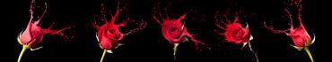 Скинали - Красные розы с красивыми брызгами на черном фоне