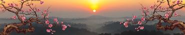 Скинали - Векторная вишня на рассвете в туманной местности