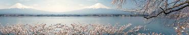 Скинали - Цветение вишни у озера на фоне Фуджи