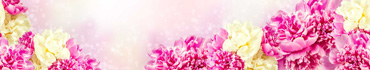 Скинали - Яркие розовые и желтые пионы