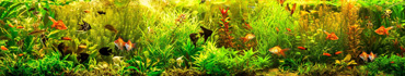Скинали - Красивый аквариум с разными рыбками